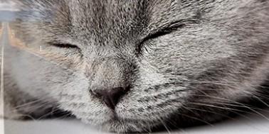 Katten med på biltur (del1 af 2)