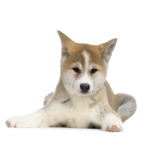 Grønlandske hunde og katte spiser også OLIVER'S