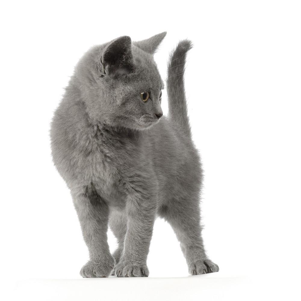 Pelspleje af katten