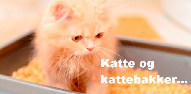 Katte og kattebakker