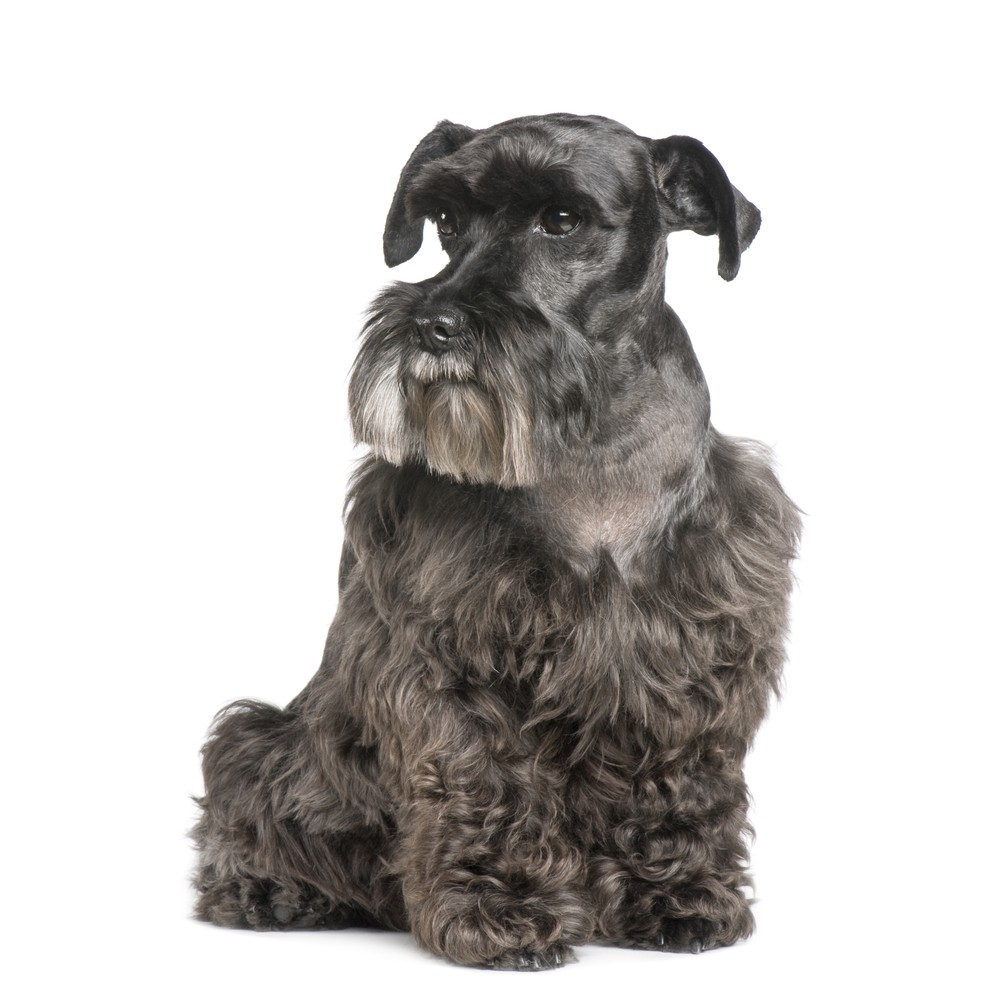 Tips til den ældre hund fra dyrlæge Linda Due