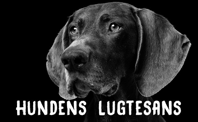 Hundens lugtesans