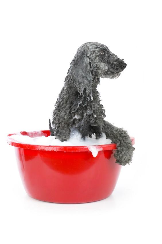 Er din seniorhund ildelugtende?