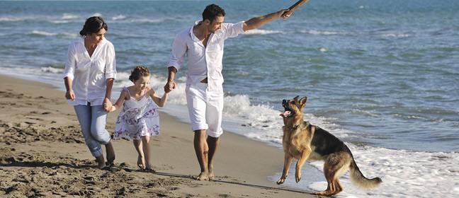 Hunde - aktivering
