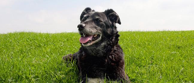 Hund – sommervarme, hedeslag og vandindtag