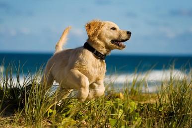 Med hundehvalpen på stranden...