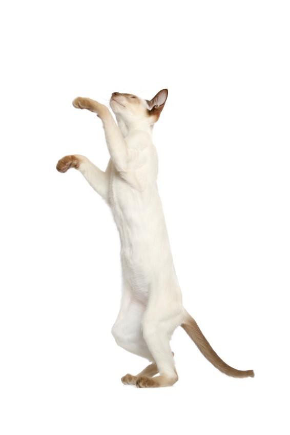 Lær din kat nogle tricks