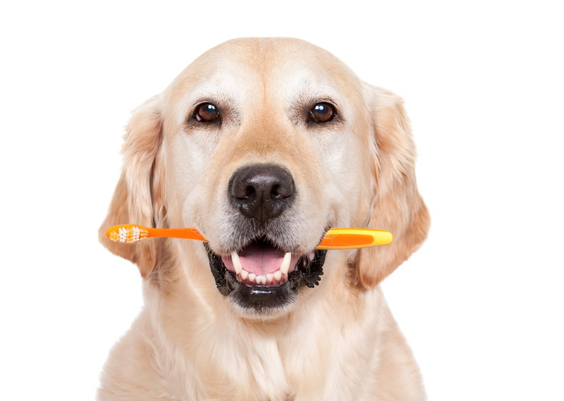 Husk lige tandbørsten...