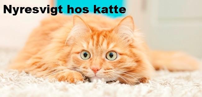 Nyresvigt hos katte