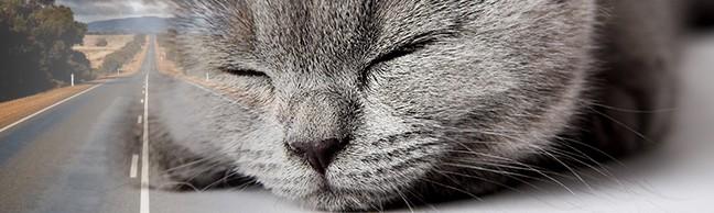 Katten med på biltur (del2 af 2)