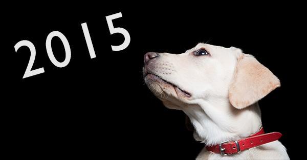 5 tips til en sund livsstil for din hund og kat