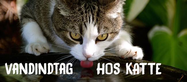 Vandindtag hos katte