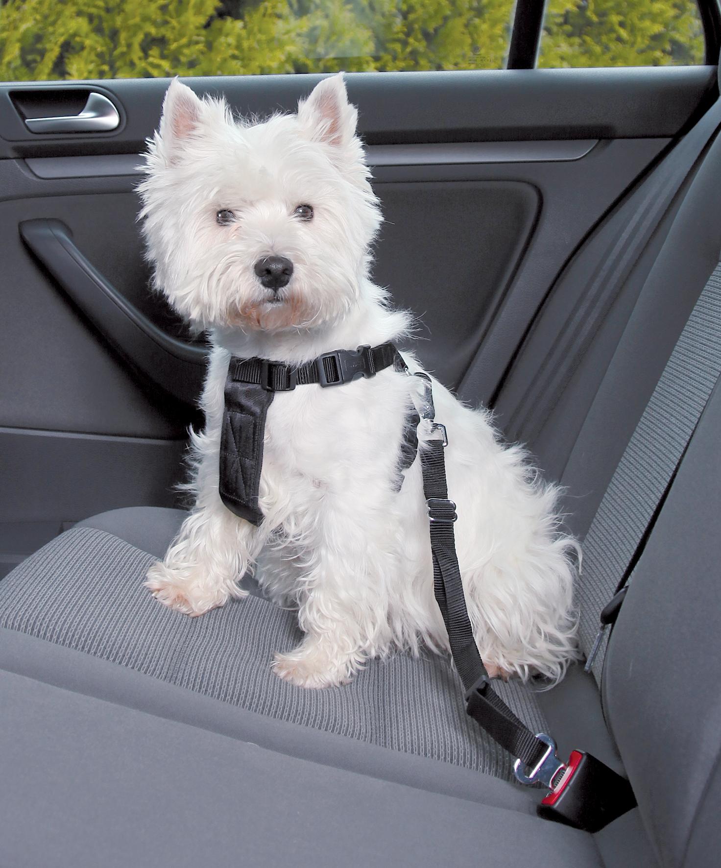 Hundesikkerhedssele til bil xs, 20-50cm